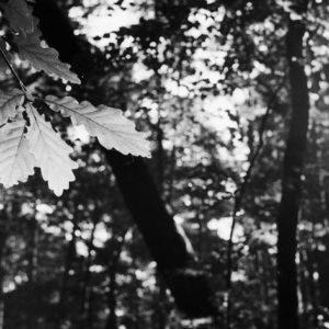 """WASHI Film """"D"""" 135 ISO 500 36 Bilder – Luftüberwachung"""