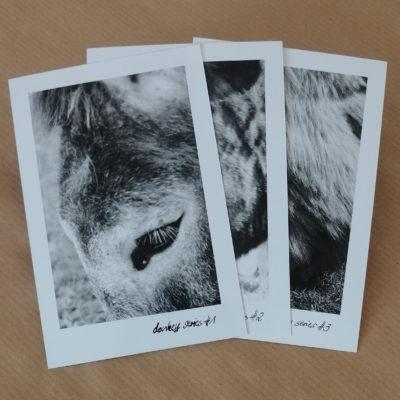 Postkarten 3er Set – Donkey Series